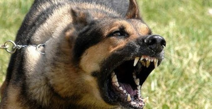 Why German Shepherd Barks At Night (Causes & Solutions)