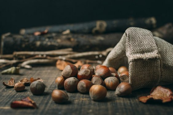 What about Chestnuts for Dogs?