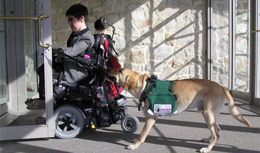 What Are The Works of Service Dogs?