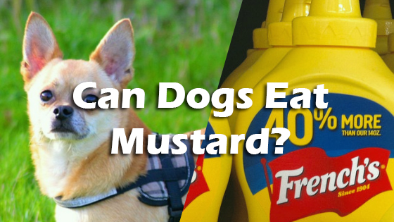 Can ​Dogs ​Eat ​Honey ​Mustard?
