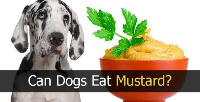 Can Dogs Eat Mustard? Is it Good For Your Dog or Not?