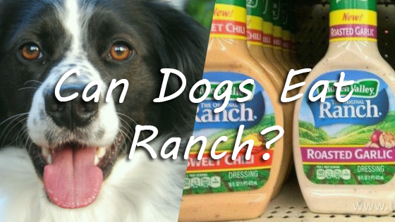 Can Dogs Eat Ranch? The ranch is Good or Bad for Dogs