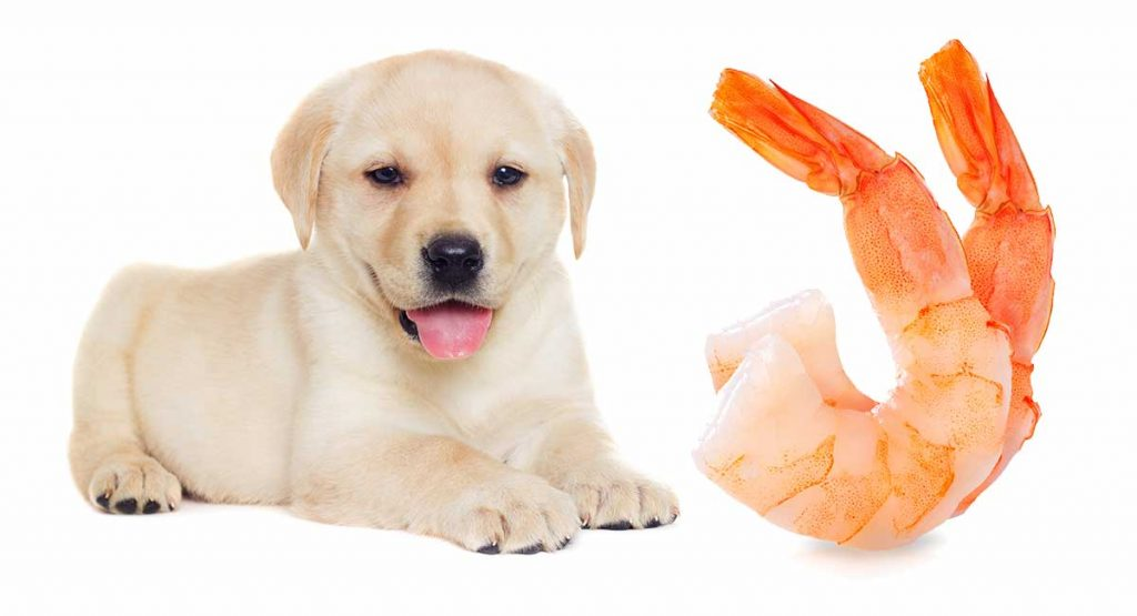 Can Dogs Eat Prawns?