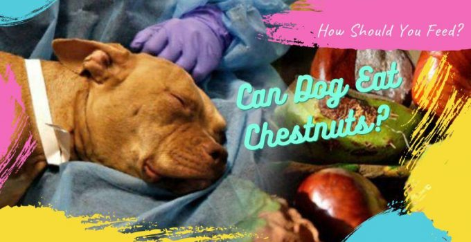 Can Dogs Eat Chestnuts? How Should You Feed