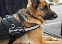 How Can You Train Your German Shepherd As A Service Dog