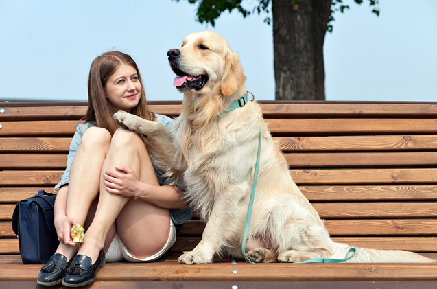 What Breeds Make Excellent Service Dogs?