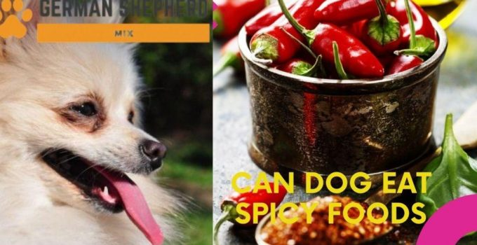 Can Dogs Eat Spicy Food? Complete Guide