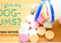 Can I Give My Dog Tums? Safe Tummy Ache Solution?