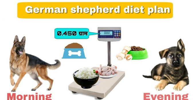 German Shepherd Feeding Chart
