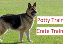 How to Potty Train a German Shepherd