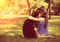 Do German Shepherds Like To Cuddle? Comelte Guide