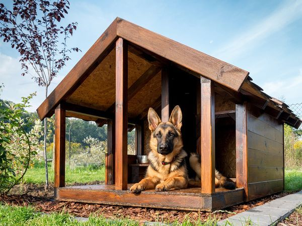 How Long Can You Leave German Shepherds Alone by Age?