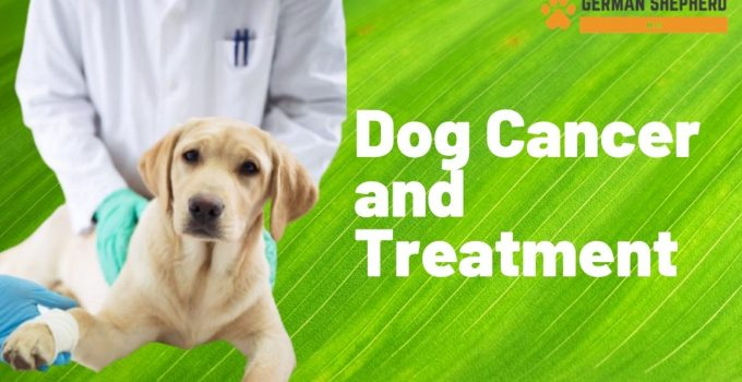 Dog Cancer - Symptoms, Diagnosis And Their Treatment