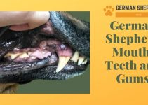 German Shepherd Mouth: Teeth and Gums
