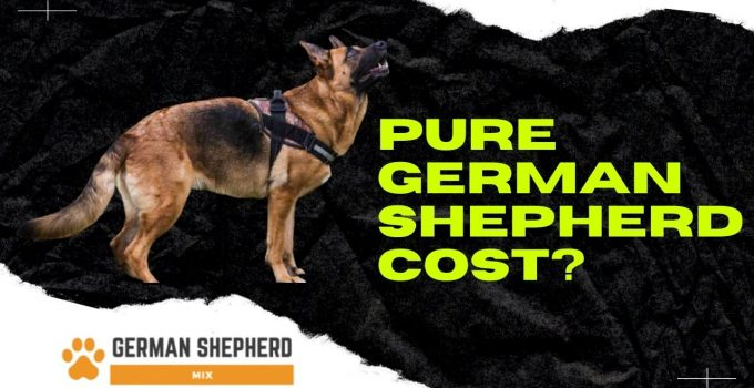 How Much Does A Pure German Shepherd Cost?