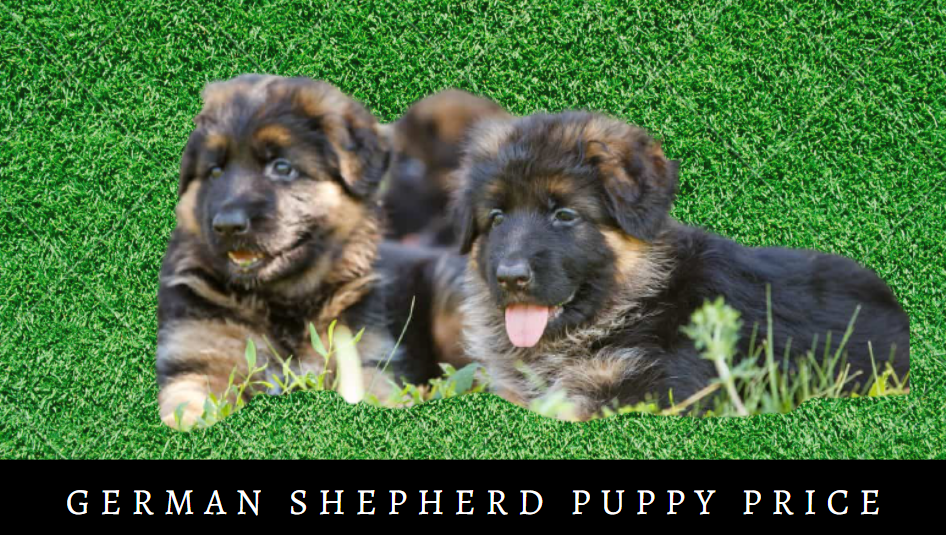 German Shepherd Puppy Price
