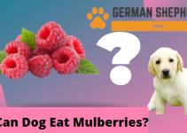 Can Dogs Eat Mulberries? Complete Overview