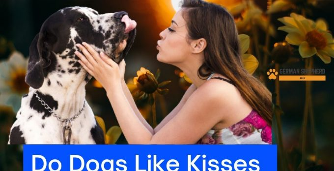 Do Dogs Like Kisses: Here is the Complete Information