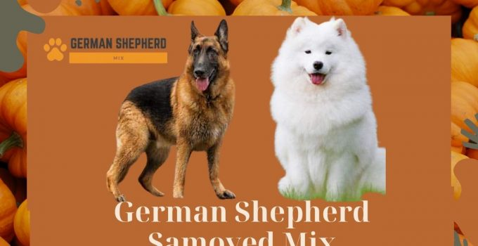 German Shepherd Samoyed Mix: Complete Guide