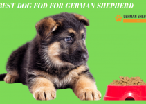 Best Dog Food for German Shepherd Complete Overview