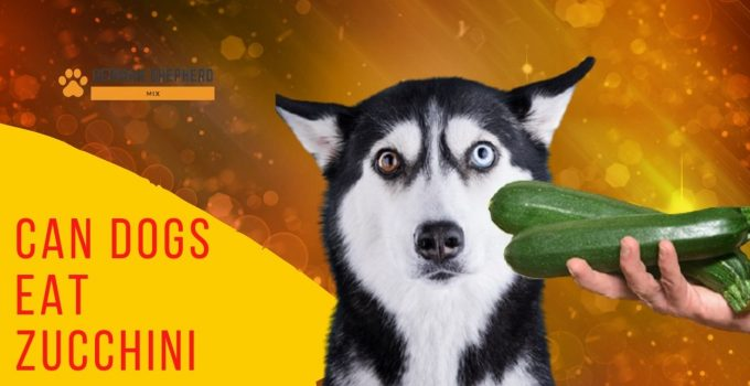 Can Dogs Eat Zucchini? Complete Guide