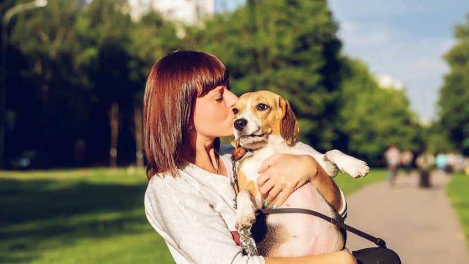 When Do Dogs Like Being kissed?